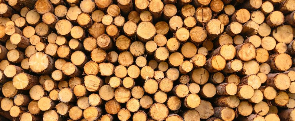 EUTR Регламент Европейского союза о лесоматериалах