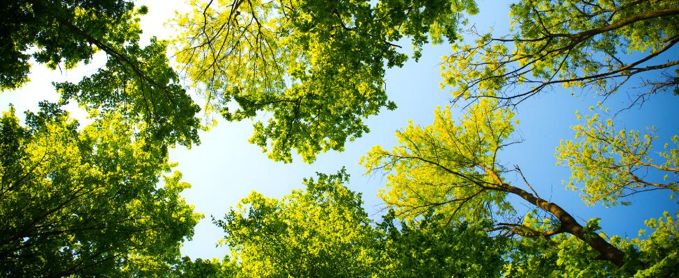 FSC<sup>®</sup> Сертификация цепочки поставок древесины