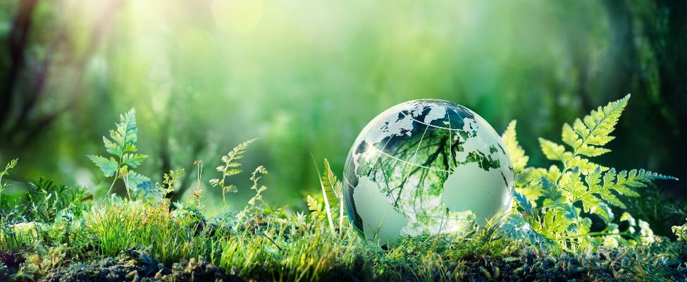 ISCC Международное устойчивое развитие и углеродная сертификация